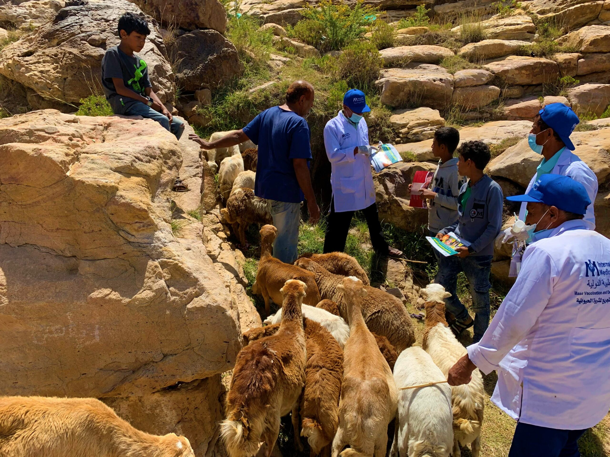 Our team in the Al Hussein district of Yemen has partnered with the Ministry of Agriculture to vaccinate local livestock.